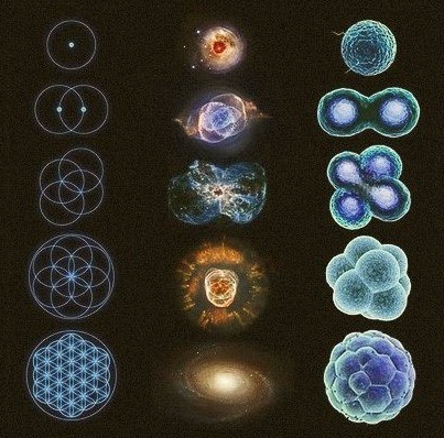 flower of life and cells