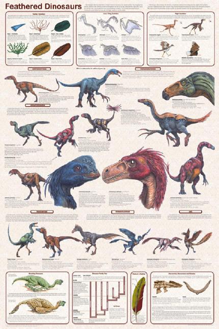 Feathered Dinosaurs - Bird Ancestors