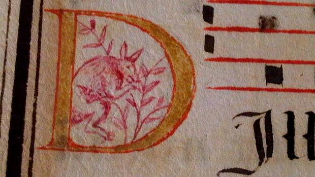 Kangaroo in 400-year-old manuscript could change Australian history