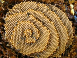 spiral-bee-hive-3_resize_md