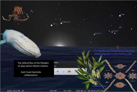 winter solstice - pleaides and whale